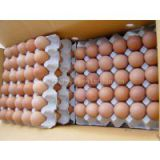 Chicken Fertile Eggs