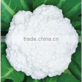 White Cauliflower Broccoli Seed For Sale Cauliflower-1