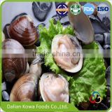 Frozen Supermarket Whole Cooked Short-necked Clam