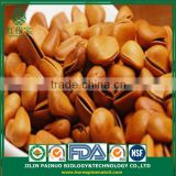 Wholesale Healthcare Screw Weight Open Pine Nuts in Shell