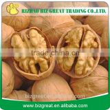 Factory Price Bulk Walnut in Think Shell