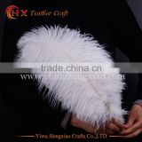 2016 high quality ostrich feathers 35-40cm in south africa