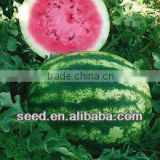 Sweet Crimson Hybrid F1 Watermelon Seeds