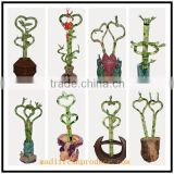 lucky bamboo wedding decoration simple style