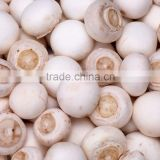 Best selling iqf frozen Mushroom with low price best quality