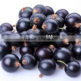 Anthocyanidins(UV5%--25%)--from Blueberry Extract