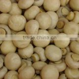 Hot Sale Canned mushroom/champignons from China                                                                         Quality Choice