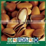Constant Supply from China Siberian Cedar Open Pine Nuts in Shell