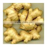 Natural Ginger Extract Powder