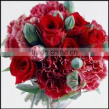 Wholesale high quality fresh Carnation fresh cut carnation flower with highly conpetitive price