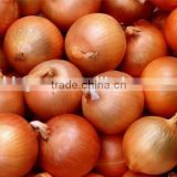 Supply Fresh yellow onion with best price for sale