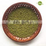 JSX competitive price mung bean sprout production big size high quality myanmar mung bean