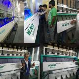 Double chute 128 channles seeds sorting machine with newest technology