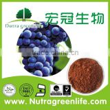Grape Seed Extract OPC 95%