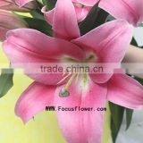 Colorful Factory Direct Natural Lily Flowers With Spray Heads/Stem Tiger Lily Silk Flowers Blue Named As Fresh Cut Lily Robina F