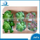 decorative succulent artificial succulents with pot for home decorations / garden decorations