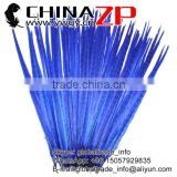 ZPDECOR Factory Wholesale High Quality Bleached Dyed Royal Blue Ringneck Pheasant Tail Feathers for Sale