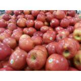 Fresh Red Fuji Apple/Fiji Apples/Red Apples