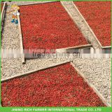 Wolfberry Lycium Barbarum Wholesale Dried Goji Berry