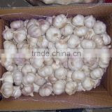 fresh dried garlic