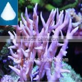 Marine Salt Aquarium Light Saltwater Fish Tank Artificial Coral Reef Aquarium Decoration