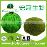 factory supply organic wheat grass juice powder for drink and beverage OEM capsule tablets