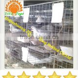 high quality pigeon cages with nests and water drinkers