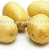New crop fresh Potato with best price for sale                                                                         Quality Choice
