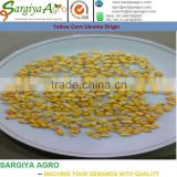Yellow Feed Corn Ukraine Origin l Maize l Price l Animal l Human l NON GMO