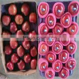 2014 Red Delicious Apple Chinese Huaniu Apple