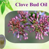 OEM Clove Leaf Essential Oil, Clove Oil/Clove Bud Oil/Clove Leaf Oil