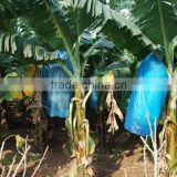 Plastic LDPE banana bunch covers for protecting banana cultivation