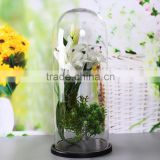 Decorative glass cloche dome with wood base for wholesale                                                                         Quality Choice