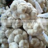 2015 new crop pure white garlic normal white garlic from shandong factory with good quality