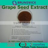 Grape Seed Extract Powder,100% ID 100% Vitis vinifera,OPCs 95% USP Grade,Low Pesticides,Aflatoxin,PAHs