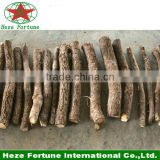 Fresh paulownia root with health certificate