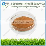 Supply natural high quality natural damiana leaf extract powder