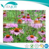 Plant extracts Echinacea Purperia 4% Polypheno Echinacea extract powder in US stock with Fast delivery