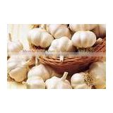 fresh garlic Size from 4.5 to 6.5cm ;Certificated by Global gap ;Packing with mesh bag and carton by loose and small packing