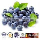 Health Food Supplement pure nature bilberry extract Anthocyanidins Acai Powder Bulk