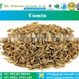 Best Quality 99% Purity Cumin Seeds from India