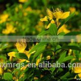 Hot sale Plant extract Hyperforin/Hypericin/St.Johns wort extract