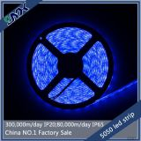 smd 5050 blue waterproof led strip for outdoor use 60leds/m DC12V
