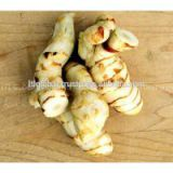 Sell Fresh Galangal