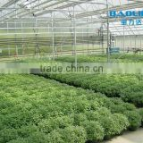 Building Double Layer Greenhouse PC Sheet greenhouse for agriculture and commercial used PC sheet garden greenhouse
