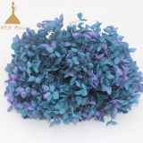 Purple Bi-Colour Preserved Hydrangea Heads for Floral Arrangements wedding  home  decoration and events