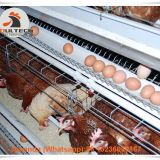 Guyana Layer Chicken Farming A Type Battery Laying Hen Cage & Chicken Coop with Automatic Egg Collection Machine 120 birds