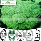 Broccoli Extract Powder Glucosinolates
