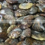 Natural Polished Jade Pattern Ammonite Fossil Stone For Sale From Madagascar