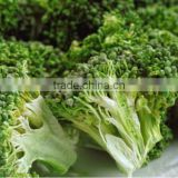 IQF frozen Broccoli with best price for sale
